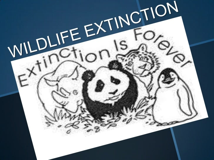 extinction of wildlife Endangered species are those considered to be at risk of extinction explore endangered species photos, videos and facts including why species are endangered and what.