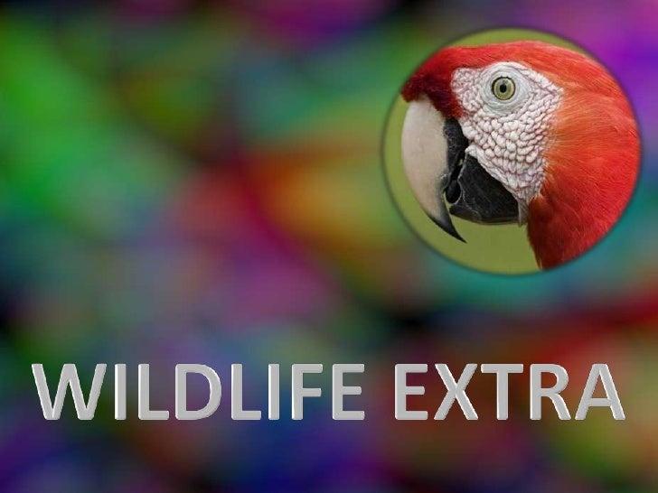 Wildlife Extra (Pp Tminimizer)