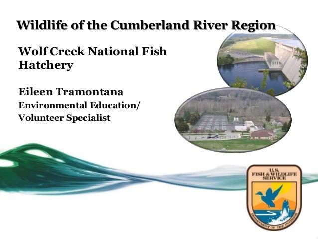 Wildlife of the Cumberland River RegionWolf Creek National FishHatcheryEileen TramontanaEnvironmental Education/Volunteer ...
