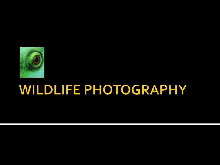 WILDLIFE PHOTOGRAPHY<br />