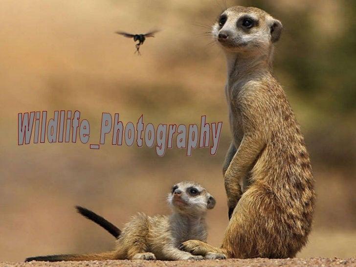 Wildlife photography  (catherine)