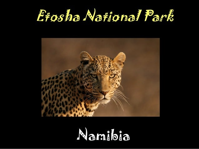 The Photographer's Guide to Etosha National Park