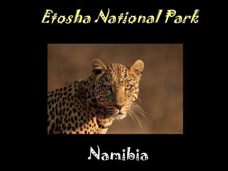 Wildlife Photography in Etosha National Park Namibia
