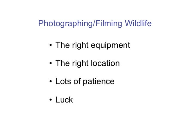 Photographing/Filming Wildlife  •  The right equipment  •  The right location  •  Lots of patience  •  Luck