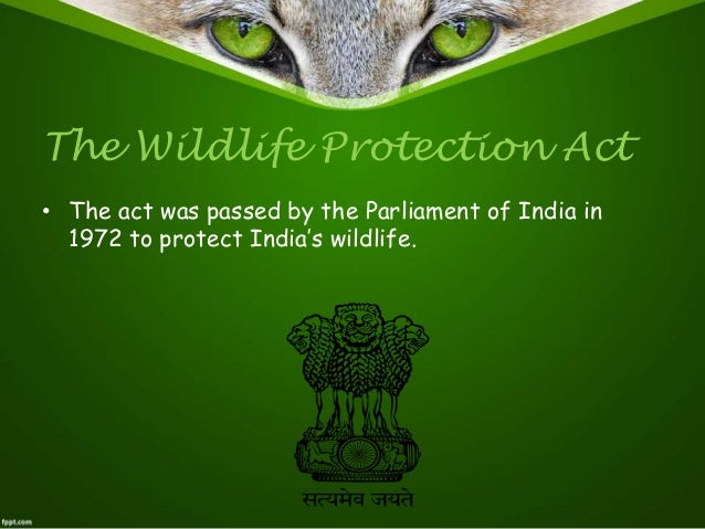 essay on wild life protection India's 59 national parks and 254 sanctuaries, which occupy an insignificant 4 percent of the country's geographical area, have proved insufficient to protect the country's wildlife.