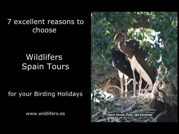 7 excellent reasons to choose   Wildlifers  Spain Tours for your Birding Holidays www.wildlifers.es
