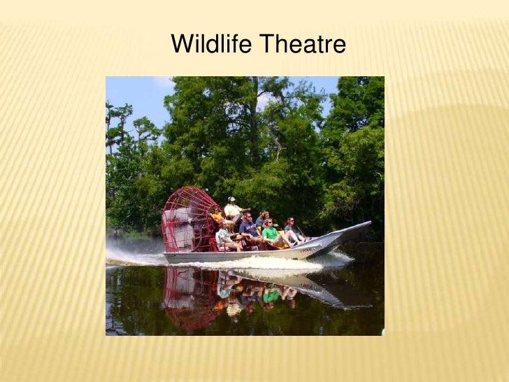 Wildlife Theatre <br />