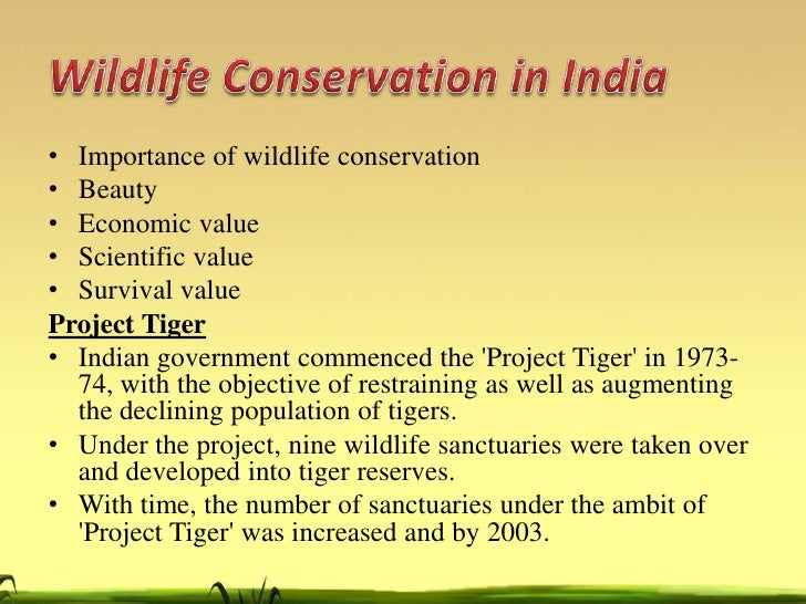 Free sample essay on Forest and Wildlife Conservation