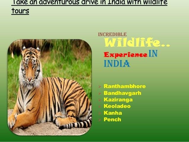 IncredibleWildlife..Experience InIndia Ranthambhore Bandhavgarh Kaziranga Keoladeo Kanha Pench