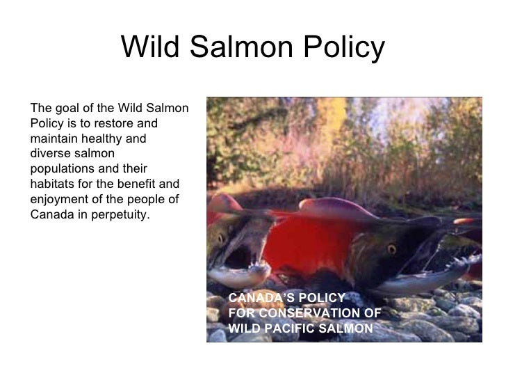 Wild Salmon Policy CANADA'S POLICY FOR CONSERVATION OF WILD PACIFIC SALMON The goal of the Wild Salmon Policy is to restor...
