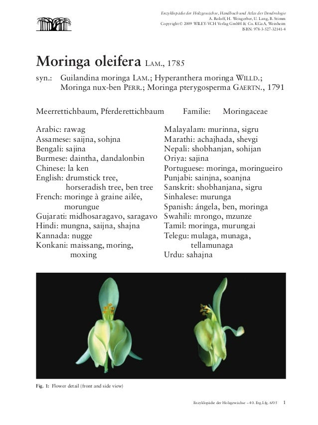 Moringa oleifera   03.04.2006    10:12 Uhr     Seite 1                                                           Enzyklopä...