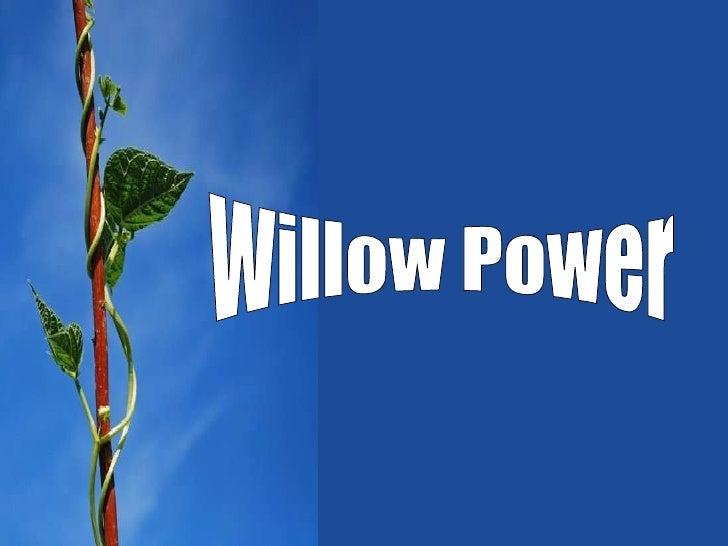 Willow Bio Energy