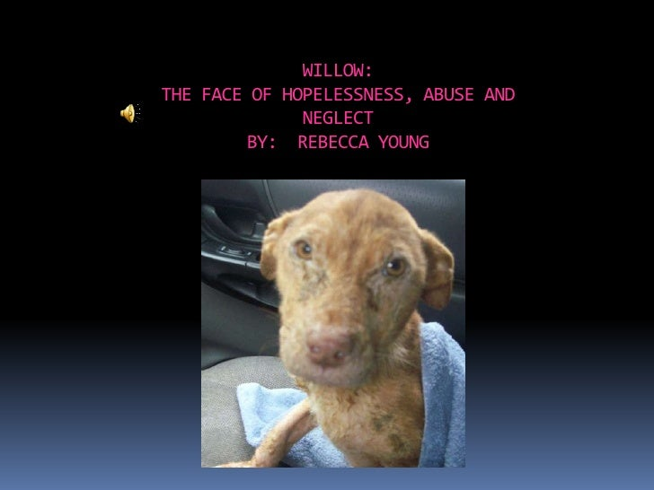 WILLOW:THE FACE OF HOPELESSNESS, ABUSE AND NEGLECTBY:  REBECCA YOUNG<br />