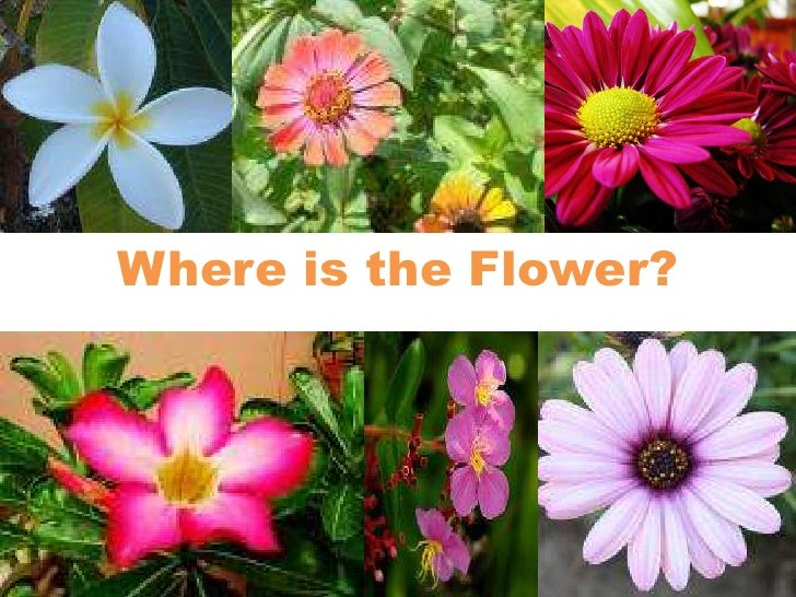 Where is the Flower?