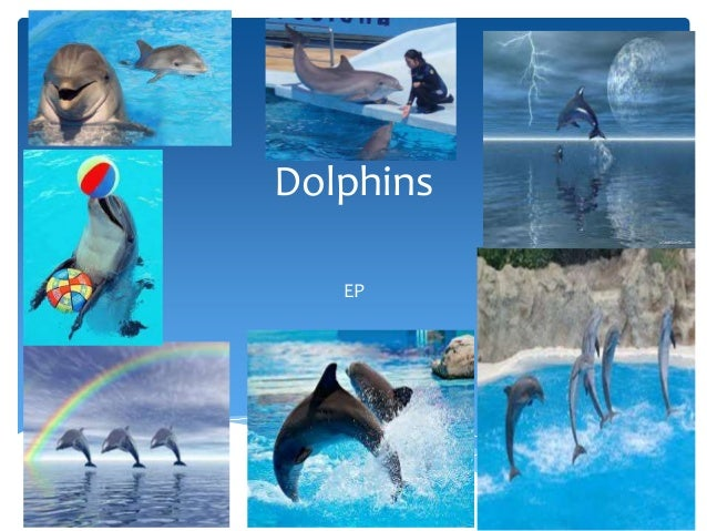 DolphinsEP