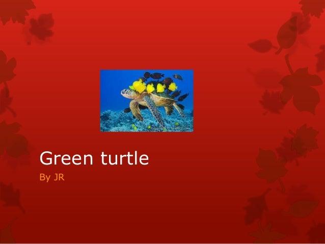 Green turtleBy JR