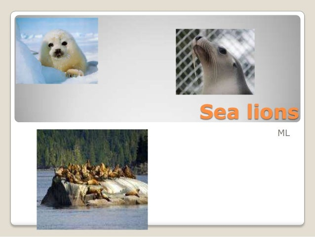 Sea lionsML