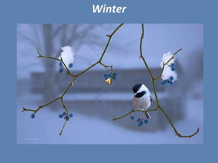 Winter<br />