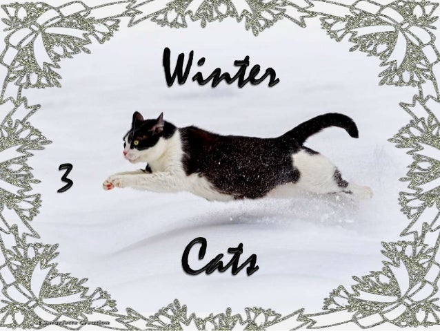 WINTER CATS 3