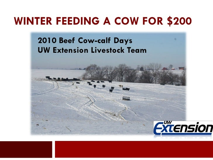 WINTER FEEDING A COW FOR $200  2010 Beef Cow-calf Days UW Extension Livestock Team