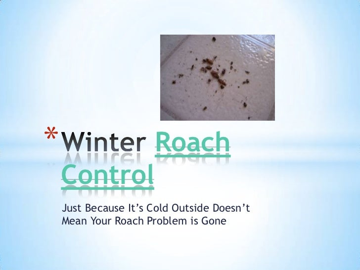 *                     Roach    Control    Just Because It's Cold Outside Doesn't    Mean Your Roach Problem is Gone