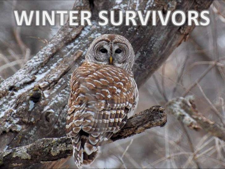 Winter survivors