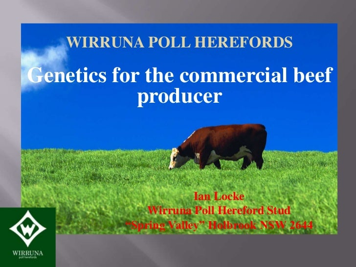WIRRUNA POLL HEREFORDSGenetics for the commercial beef            producer                       Ian Locke              Wi...