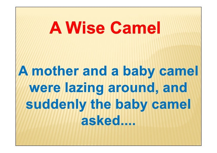 Wise word-from-a-camel