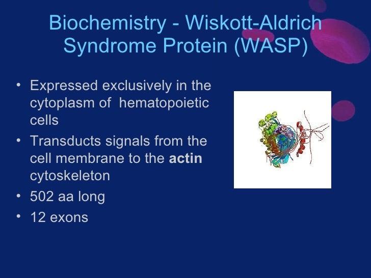 Wiskott-Aldrich-Syndrom – Wikipedia