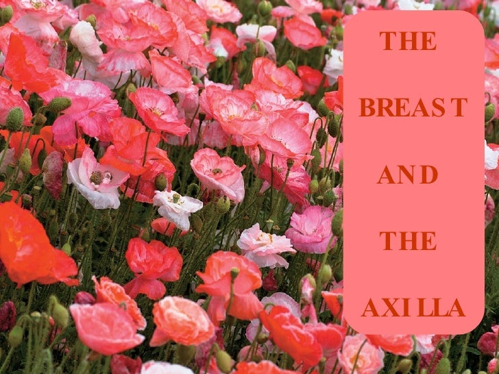 THE   BREAST  AND  THE  AXILLA