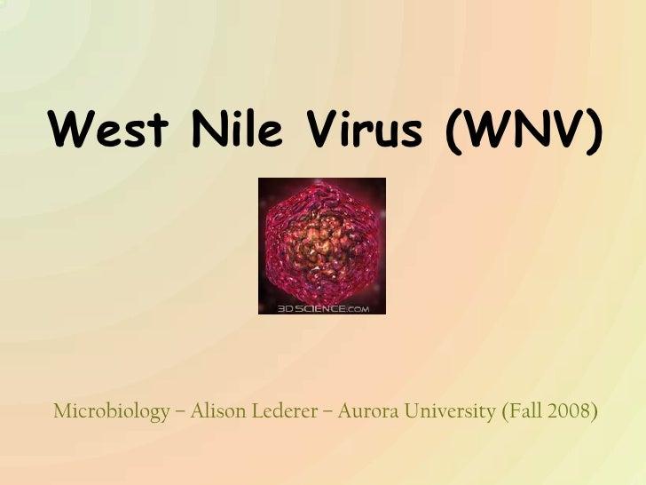 West Nile Virus (WNV)<br />Microbiology – Alison Lederer – Aurora University (Fall 2008)<br />