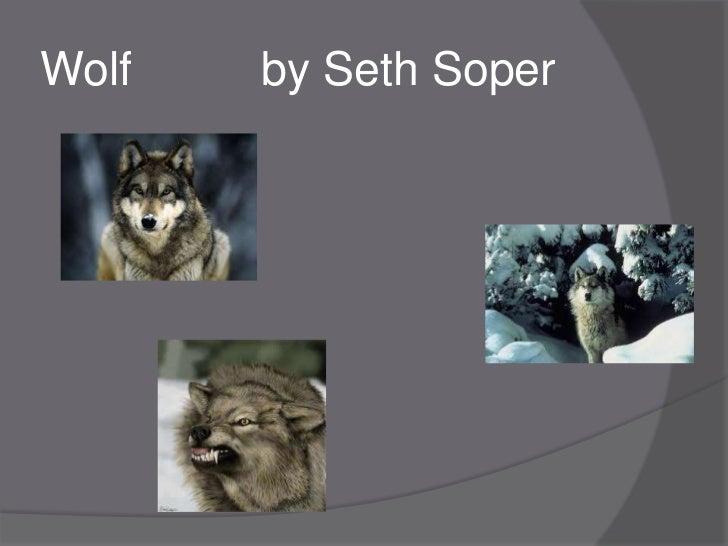 Wolf          by seth soper