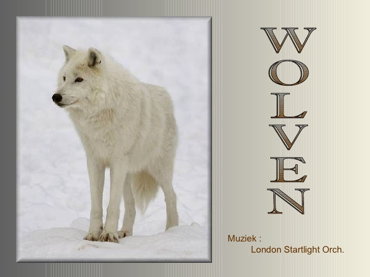 WOLVEN Muziek :  London Startlight Orch.