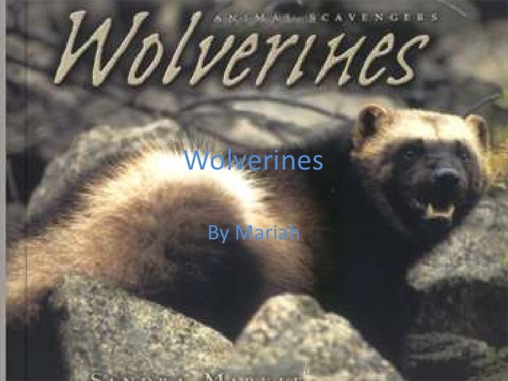 Wolverines<br />By Mariah<br />