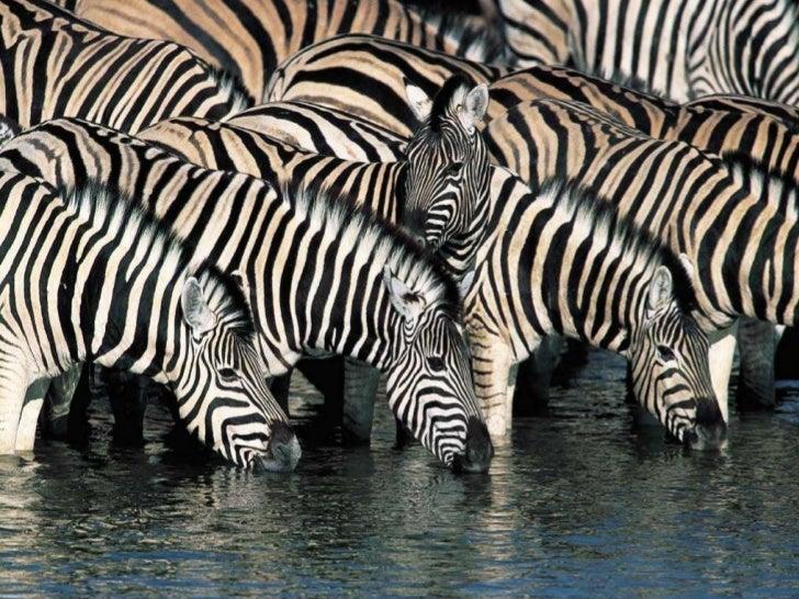 Wonderful Animals Shots
