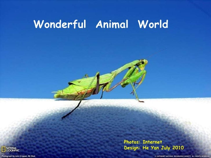 Photos: Internet  Design: He Yan July 2010 Wonderful  Animal  World