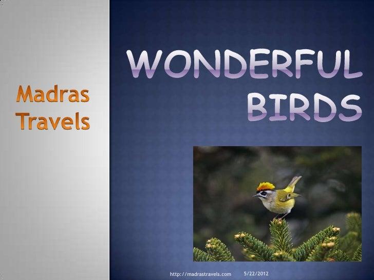 Wonderful Birds