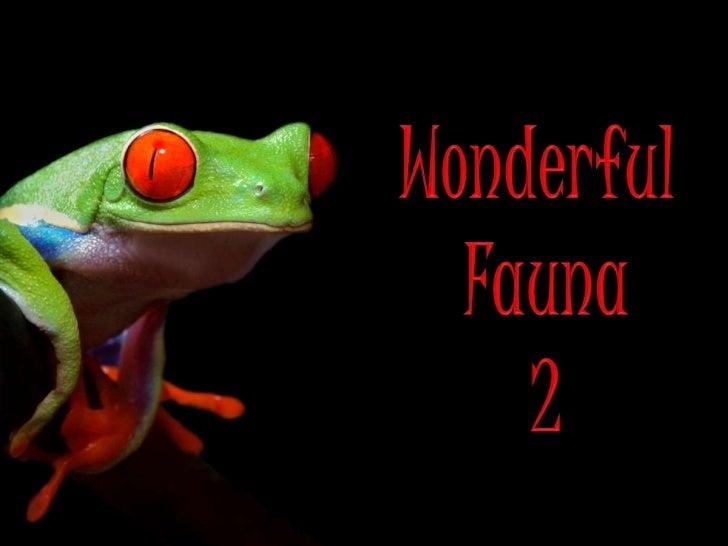 WONDERFUL FAUNA 2