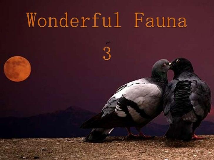 WONDERFUL FAUNA 3