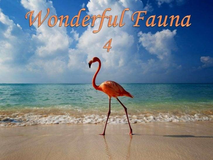 WONDERFUL FAUNA 4