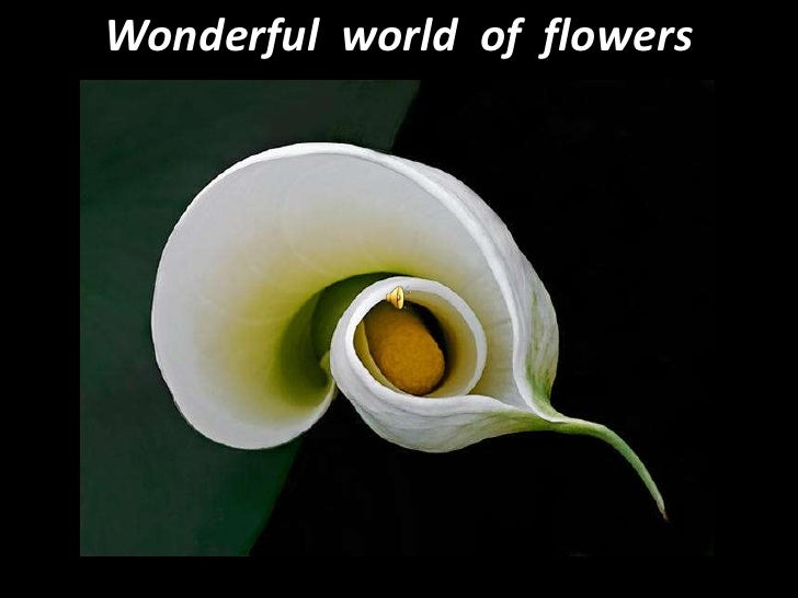 Wonderful  world  of  flowers<br />