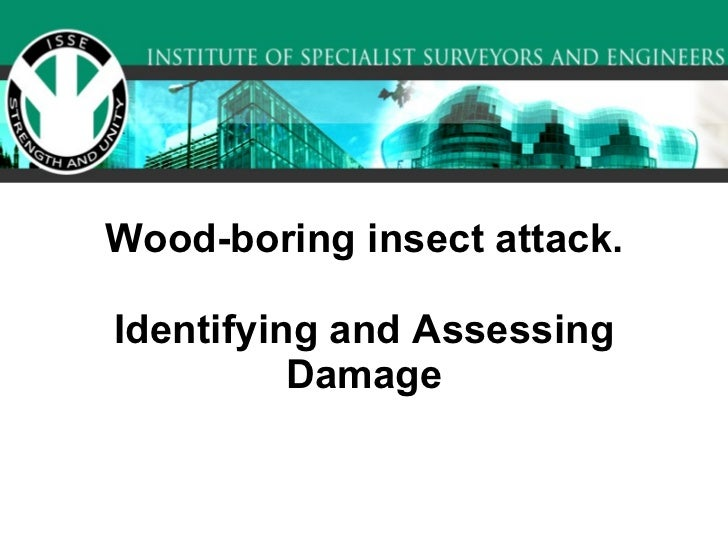 Wood-boring insect attack. Identifying and Assessing Damage