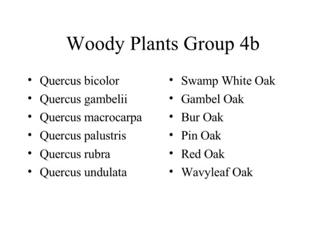 Woody Plants Group 4b