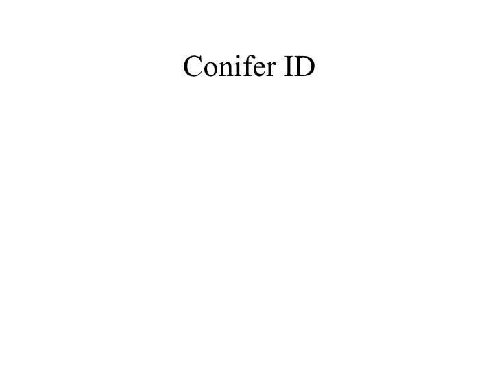 Conifer ID