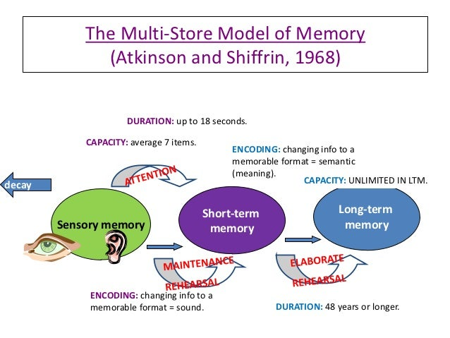 working memory and its components