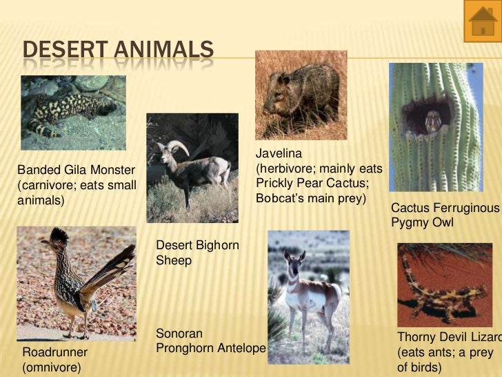 Animals that live in the desert biome