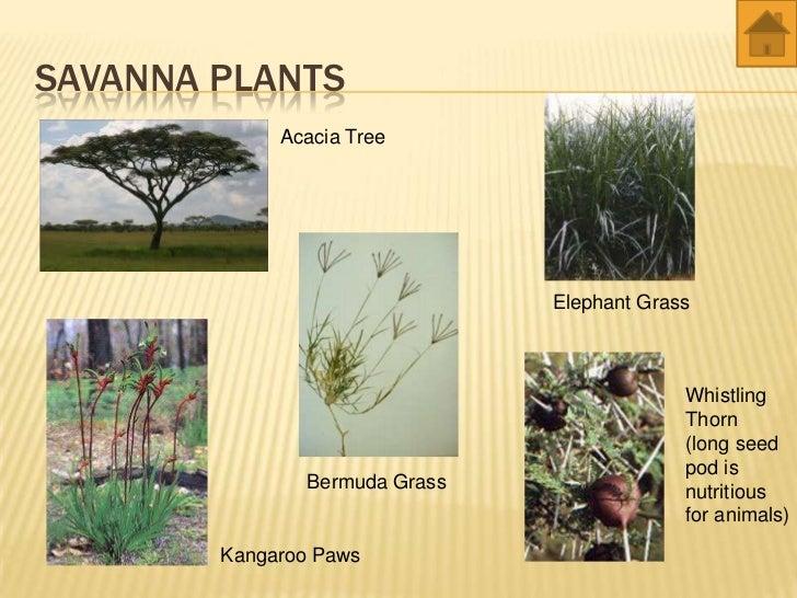 Grassland animals and plants names