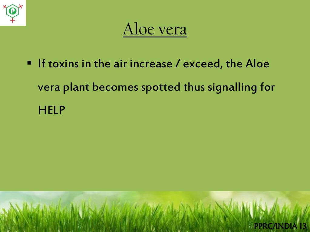 Aloe vera if toxins - Aloe vera plant care tips beginners guide ...