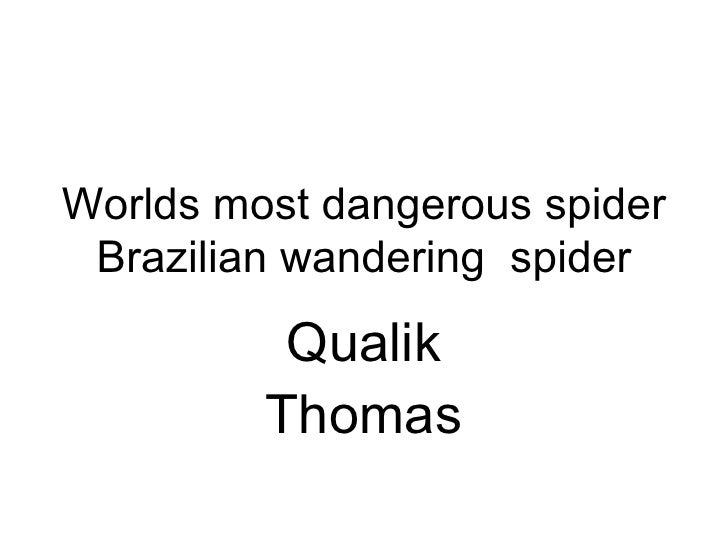 Worlds most dangerous spider Brazilian wandering  spider Qualik Thomas