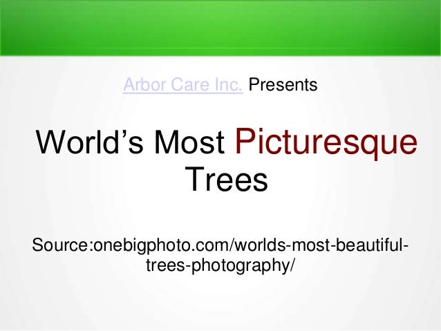 World's Most Picturesque Trees Arbor Care Inc. Presents Source:onebigphoto.com/worlds-most-beautiful- trees-photography/